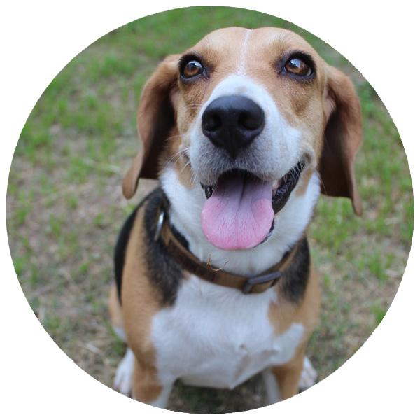 Doggie Day Care in Aliquippa, PA